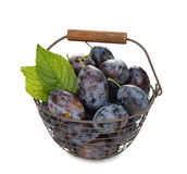 Fresh plums in a basket Royalty Free Stock Photography