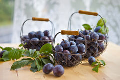 Fresh plums in baskets Stock Photography