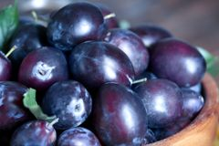 Fresh plums in bowl. Closeup Stock Images