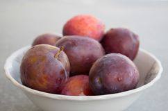 Fresh plums in a bowl. Fresh just washed plums in a bowl. Plums with drops Stock Photo