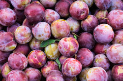 Fresh plums on display Royalty Free Stock Image