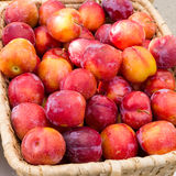 Fresh plums displayed in a basket Royalty Free Stock Photography