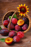 Fresh plums falling out of a basket Royalty Free Stock Image