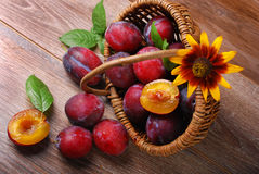 Fresh plums falling out of a basket Royalty Free Stock Photography