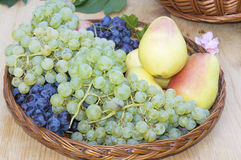 Fresh plums, grapes and pears in wooden basket Royalty Free Stock Images