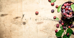 Fresh plums with green leaves. Stock Photography