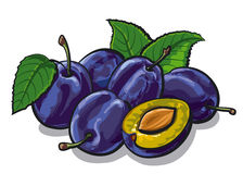Fresh plums. Illustration of the fresh plums Royalty Free Stock Photography