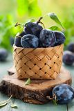Fresh plums with leaves Royalty Free Stock Photos