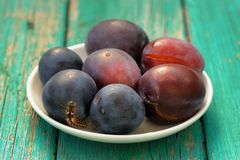 Fresh plums and live black caterpillar in white plate on turquoi Royalty Free Stock Images