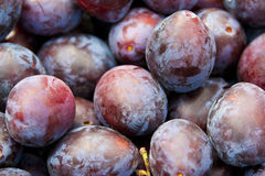 Fresh plums macro Stock Photos
