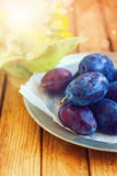 Fresh plums in metal vintage plate Royalty Free Stock Images