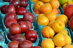 Fresh plums and nectarines Stock Photography