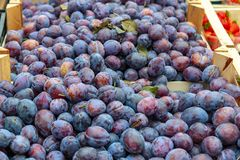 Fresh fruit of plums sold at the market in Germany. Fresh fruit of plums sold at the market in downtown city of Leipzig, Germany stock photography