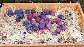 Fresh plums stock video
