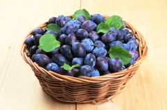 Fresh plums. In a wicker basket royalty free stock images