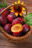 Fresh plums in a wicker basket Royalty Free Stock Photos