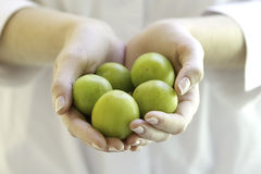 Fresh plums in woman's hands. The young woman is holding fruits in hands Royalty Free Stock Photo