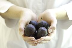 Fresh plums in woman's hands. Royalty Free Stock Photos