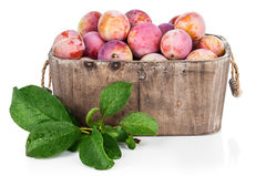 Fresh plums in wooden basket with green leaves Royalty Free Stock Photography