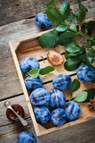 Fresh plums in wooden box and jar of fruit jam. Top view. Stock Images