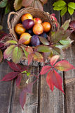 Fresh plums on wooden table Stock Images
