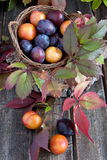 Fresh plums on wooden table Royalty Free Stock Photos