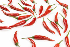 Fresh pods of red chilli peppers on white background, close up Stock Images