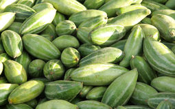 Fresh pointed gourds Stock Image
