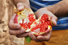 Fresh pomegranate. Open in hands royalty free stock photos