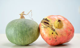 Fresh pomegranate and pumpkin Royalty Free Stock Images