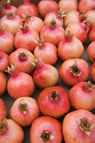 Fresh pomegranates Royalty Free Stock Photography