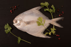 Fresh pomfret garnished with peppercorns and coriander on black background Stock Photo