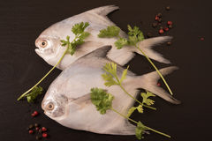 Fresh pomfret garnished with peppercorns and coriander on black background. Stock Photos