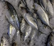Fresh Seafood On Ice In Asian Market. Fresh pompano on display in outdoor markets stock photos