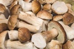 Fresh porcini mushrooms background. Fresh porcini mushrooms closeup background Stock Images