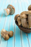 Fresh porcini mushrooms in earthenware basin on wooden turquoise table Royalty Free Stock Photos
