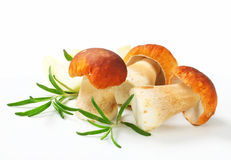 Fresh porcini mushrooms Royalty Free Stock Images