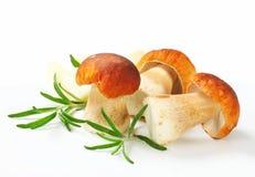 Fresh porcini mushrooms. Studio shot of fresh porcini mushrooms Royalty Free Stock Images