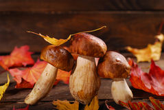 Fresh porcini mushrooms  on wooden table Stock Photography