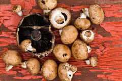 Fresh portobello and brown agaricus mushrooms Royalty Free Stock Photos
