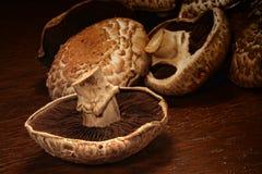 Fresh portobello mushrooms stock photos