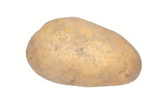 Fresh Potato from Farm Stock Photography