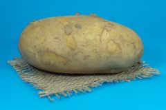 Fresh potato on a square of hessian. Raw, unwashed, unpeeled potato on a square of hessian isolated on blue background royalty free stock photos