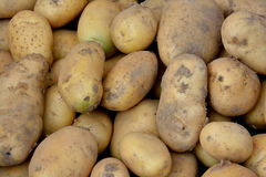 Fresh potato Royalty Free Stock Image