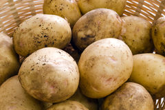 Fresh Potatoes. Piled in a wicker basket Stock Images