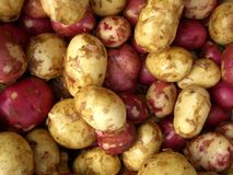 Fresh Potatoes. Red and White Potatoes Royalty Free Stock Photos