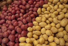 Fresh Potatoes Background. Two different kinds of potatoes side by side in bin Royalty Free Stock Image