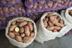 Fresh potatoes in a bags stock photography