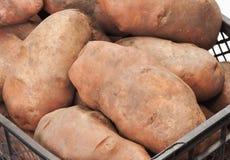 Fresh potatoes in a box. On white Royalty Free Stock Photo