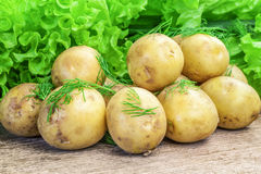 Fresh potatoes with dill and lettuce leaves. On wooden table Stock Photos